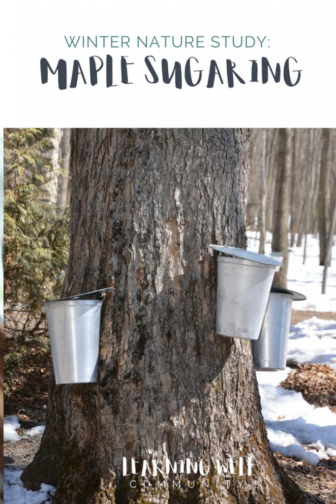 Unit study idea: Maple Sugaring at home
