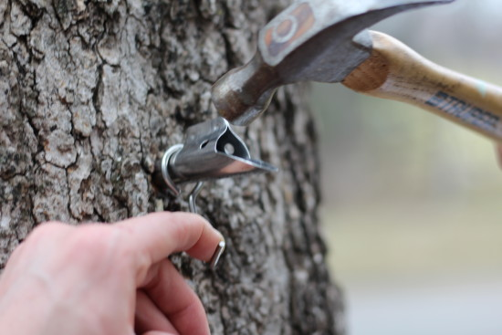 How to make maple syrup at home.