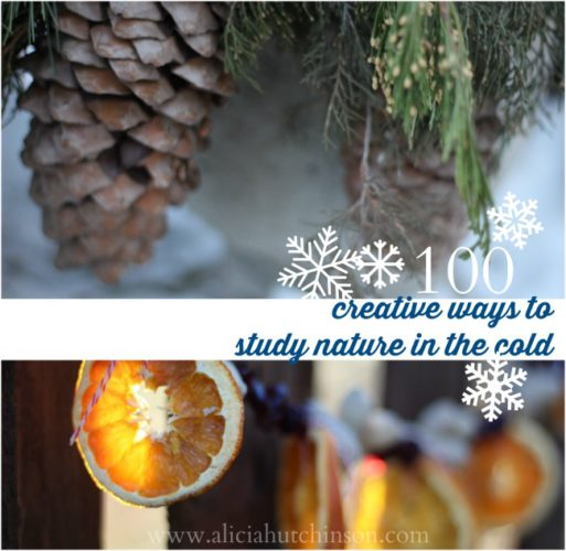 Winter time doesn't mean you have to put away your nature studying for the season. There's still LOTS of ways you can study nature in the cold. Here's 100 (!!!) ways you can!