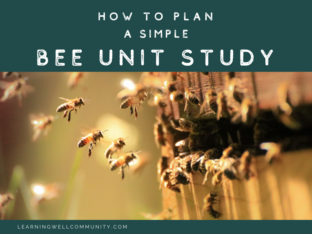 Creating a simple bee unit study for your kids can be so easy and fun! Read on for our simple tips and ideas of how to study bees together!